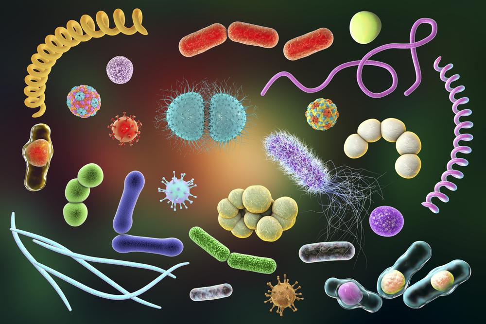 список урогенитальных инфекций